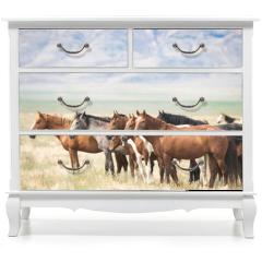 Naklejka na meble - Wild Horses of Utah