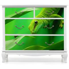 Naklejka na meble - green gecko lizard