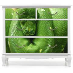Naklejka na meble - green snake