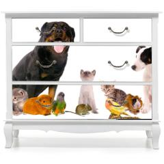 Naklejka na meble - montage animaux