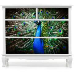 Naklejka na meble - Beautiful peacock