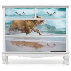 Naklejka na meble - Happy dog Bulldog running at the sea