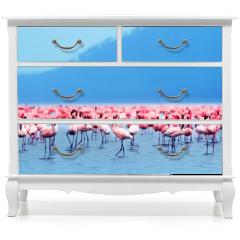 Naklejka na meble - African flamingos