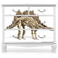 Naklejka na meble - Stegosaurus Skeleton