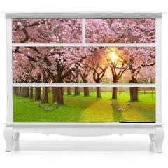 Naklejka na meble - Faszinierende Frühlingsszene bei Abendsonne