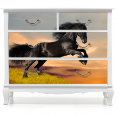 Naklejka na meble - Black Friesian horse gallops in sunset