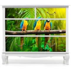 Naklejka na meble - Blue-and-Yellow Macaw