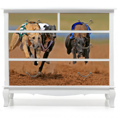 Naklejka na meble - sprinting greyhounds