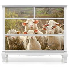 Naklejka na meble - Sheep on pasture