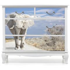 Naklejka na meble - elephant road