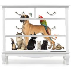 Naklejka na meble - Group of pets - Dog, cat, bird, reptile, rabbit,...