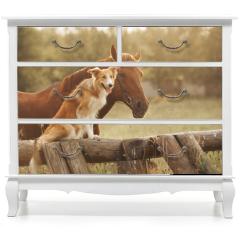 Naklejka na meble - Red border collie dog and horse