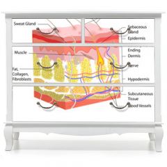 Naklejka na meble - Skin Anatomy