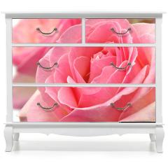 Naklejka na meble - Kwiat róży