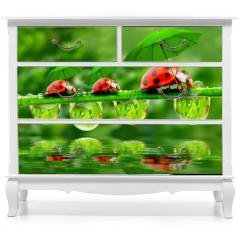 Naklejka na meble - Little ladybugs with umbrella.