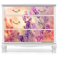 Naklejka na meble - Soft focus on beautiful lavender and sun rays - sunbeams