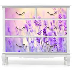 Naklejka na meble - Lavender lit by sun rays