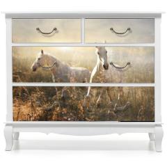 Naklejka na meble - white horse galloping on meadow