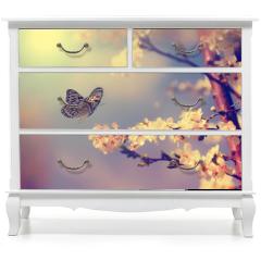 Naklejka na meble - Butterfly and cherry blossom