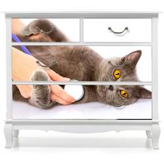 Naklejka na meble - doctor and a British cat on white background