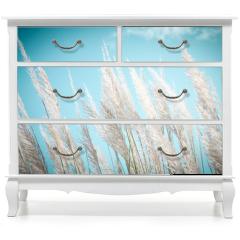 Naklejka na meble - softness white Feather Grass with retro sky blue