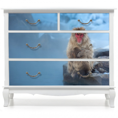 Naklejka na meble - now monkey Macaque Onsen
