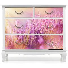 Naklejka na meble - Lavender flowers lit by sun rays (sunbeams)