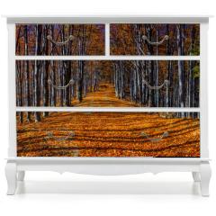 Naklejka na meble - Colorful autumn trees