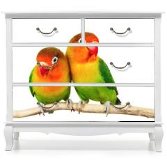 Naklejka na meble - Pair of lovebirds agapornis-fischeri isolated on white
