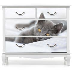 Naklejka na meble - Kot