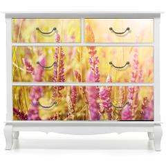 Naklejka na meble - Fioletowe kwiaty na łące