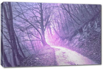 Obraz na płótnie canvas - Magical foggy purple, serenity pantone color light in mystic forest with road.