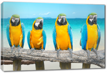 Obraz na płótnie canvas - Blue and Gold Macaw on tropical beautiful beach and sea