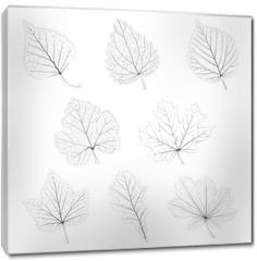 Obraz na płótnie canvas - Set of vector isolated monochrome single leaves