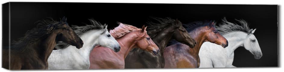 Obraz na płótnie canvas - Six horses portraits isolated on a black background