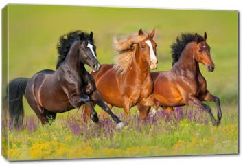 Obraz na płótnie canvas - Horses run gallop in flower meadow