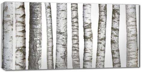 Obraz na płótnie canvas - Verschiedene Birkenstämme, isoliert auf weißem hintergrund