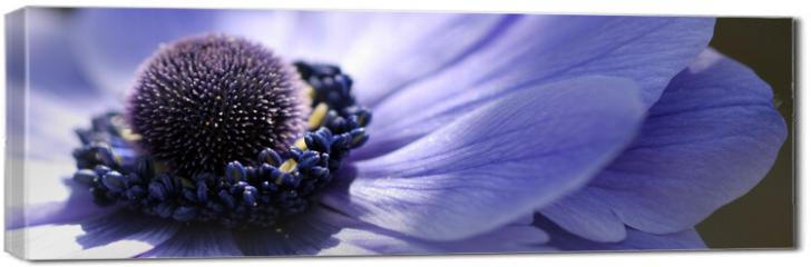 Obraz na płótnie canvas - fleur bleue