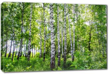 Obraz na płótnie canvas - birch grove