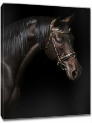 Obraz na płótnie canvas - Portrait of a bay stallion