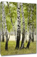 Obraz na płótnie canvas - birch forest summer landscape