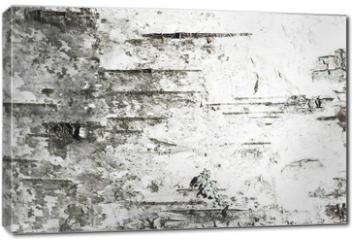 Obraz na płótnie canvas - White old birch tree bark. Closeup
