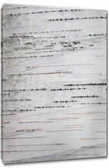 Obraz na płótnie canvas - Paper Birch Bark Background