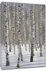 Obraz na płótnie canvas - Winter Forest