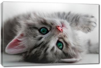 Obraz na płótnie canvas - Kitten rest - isolated