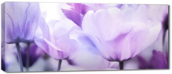 Obraz na płótnie canvas - tulips pink violet ultra light