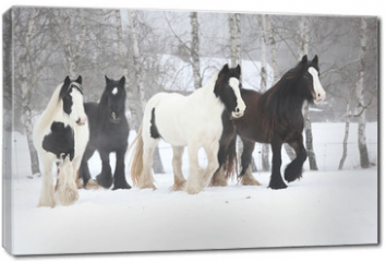Obraz na płótnie canvas - Nice irish cobs running in winter
