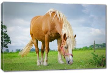 Obraz na płótnie canvas - Braunes Pferd weidet in auf einer Wiese