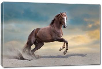 Obraz na płótnie canvas - Red horse run in desert dust against blue sky