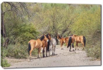 Obraz na płótnie canvas - Wild Horses Near the Salt River in the Arizona Desert